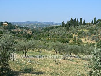 Florenz ist von wunderschönen toskanischen Landschaften umgeben!