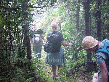 Ausflug in den Dschungel