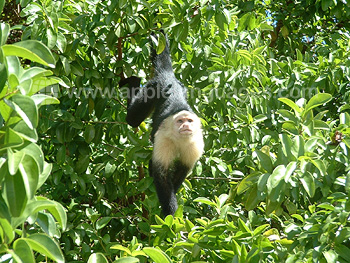 Monkey in nearby forest