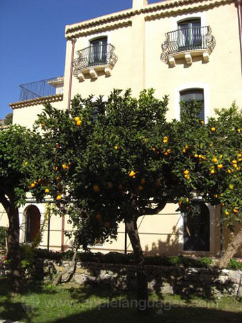Obstbäume im Schulgarten