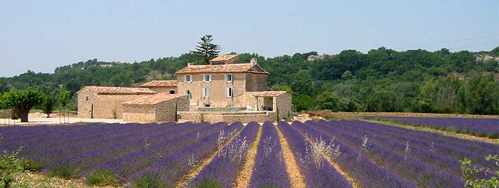 Lavendelfeld in Aix en Provence
