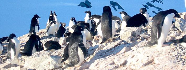 Pinguine bei Ushuaia, Argentinien